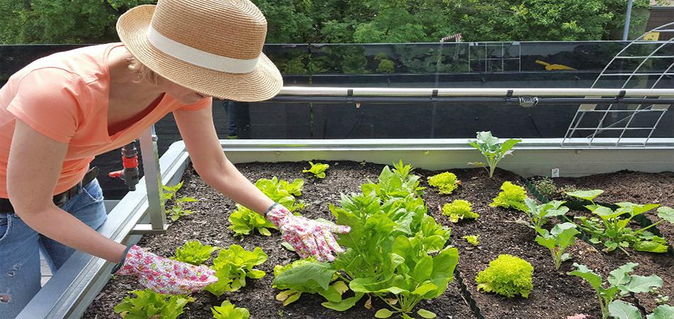 Quels sont les légumes les plus simples à cultiver dans son jardin ?