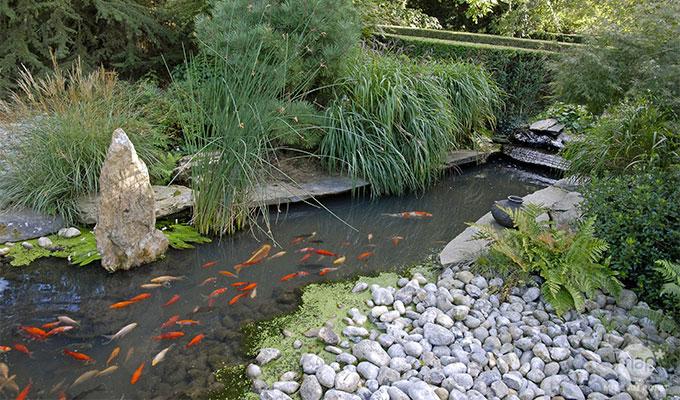 Les avantages d'avoir un bassin de jardin sur son terrain et les erreurs à éviter