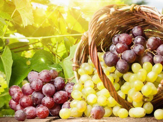 Comment cultiver le raisin dans son jardin ?