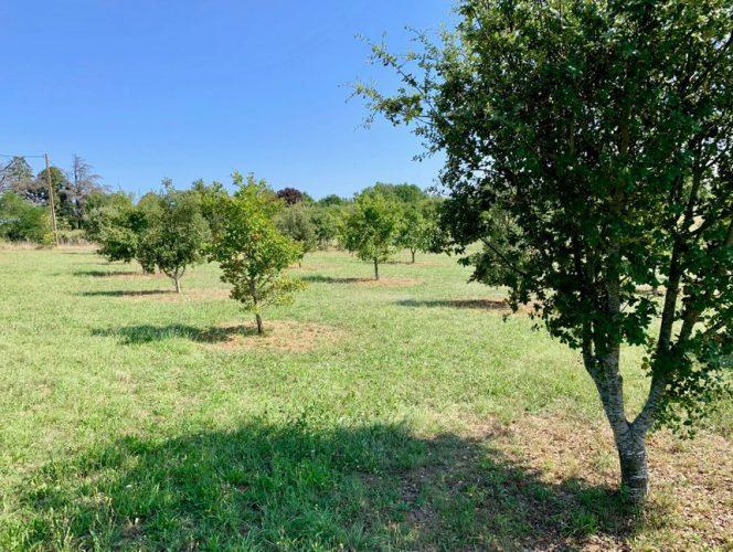 Où trouver des plants de chênes truffiers de qualité ?